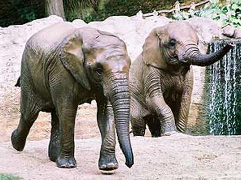 Zoologická zahrada Zlín  e65b2d14ca
